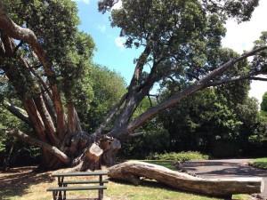 alice-wylie-tree