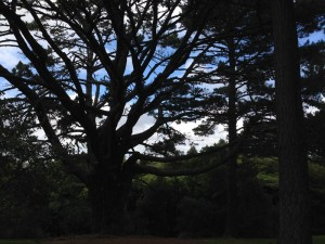 heron-park-trees
