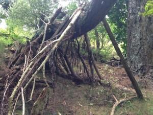 oakley-tree-house