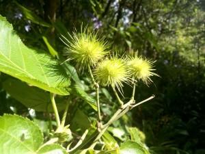 owairaka-plants-1