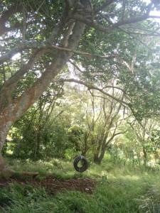 owairaka-trees-1