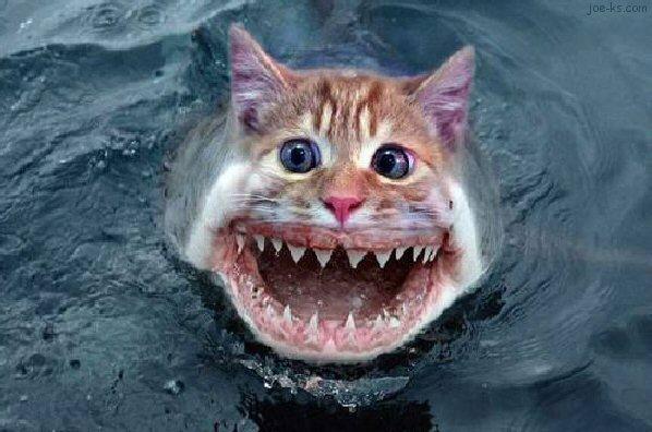 cat-fish-18